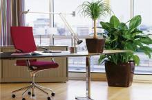Как украсить офис?